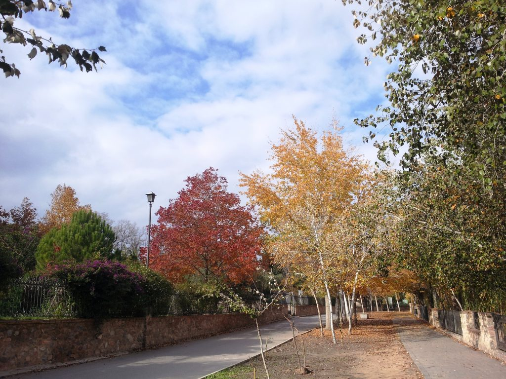 Imagen del paisaje que rodea el Paseo Ribereño de Cieza.