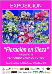 """Exposición de fotografías """"Floración en Cieza"""" de Fernando Galindo en el Museo Siyâsa de Cieza @ Museo de Siyâsa."""