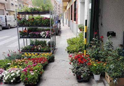 Foto de Todo tipo de las plantas en Piensos y Jardinería El Molino, Cieza.