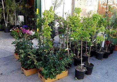 Foto de Árboles frutales en Piensos y Jardinería El Molino, Cieza.