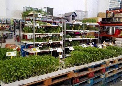 Foto de las Hortalizas varias en Piensos y Jardinería El Molino, Cieza.