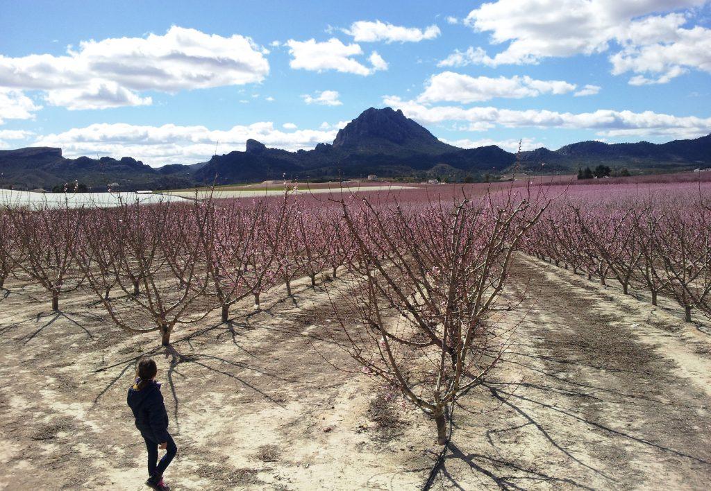 Foto de una niña Visitando la Floración en Cieza, foto CiezaEnTuMano.es