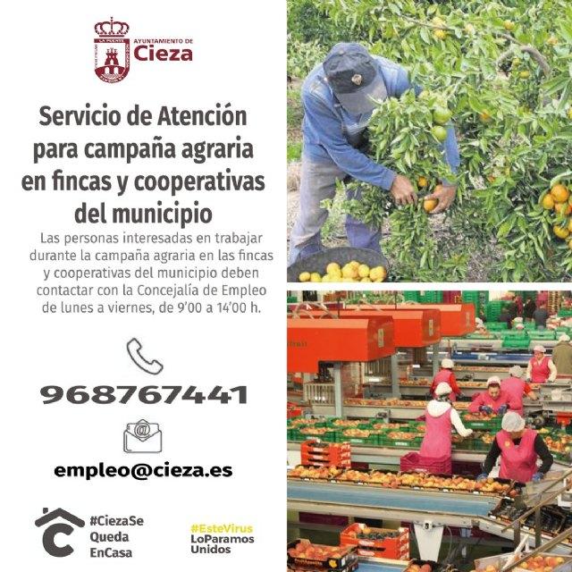 El Ayuntamiento de Cieza elabora una bolsa de trabajo para salvar la campaña de fruta